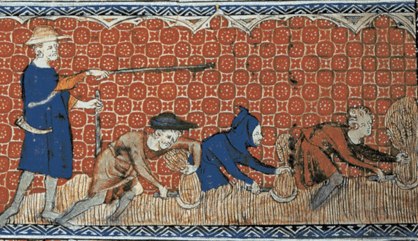 Serfs harvesting wheat with reaping-hooks